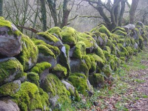 Dry_stone_wall_covered_in_moss_-_geograph.org.uk_-_1421069
